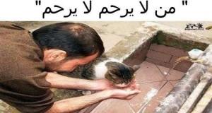 آداب معاملة الحيوان